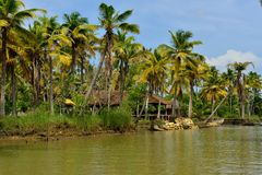 Mares au Kerala, Inde Photo libre de droits