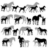 Mares and foals silhouettes copy. Silhouettes isolated on white of horses mares and foals Royalty Free Stock Photos