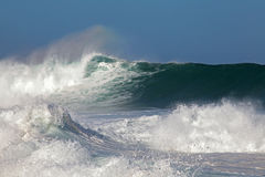 Mares locos Imagen de archivo