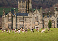 Margam Castle Stock Images