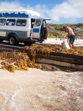 Margaret River, Australie occidentale, 06/10/2013, vague déferlante de Margaret River, homme rassemblant l'algue dans un rétro fo Photos stock