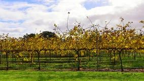 Margaret River vineyard Royalty Free Stock Images