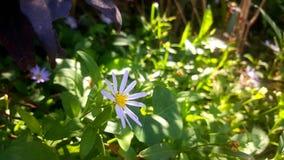 margaretflowers Obrazy Royalty Free