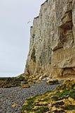 飞行在多弗白色峭壁的海鸥在圣Margarets在克利夫在大英国 免版税库存图片
