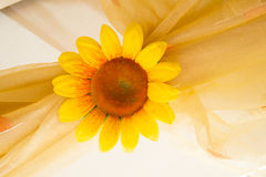 Margarida amarela Fotografia de Stock