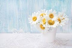 A margarida branca floresce no vaso branco na luz - fundo azul Holi Fotos de Stock Royalty Free
