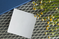 Margarida com uma etiqueta em um fundo branco da malha com azul Fotos de Stock Royalty Free