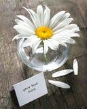 Margarida no vaso e no cartão de papel Imagem de Stock Royalty Free