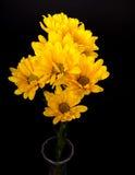 MARGARIDAS AMARELAS Imagens de Stock Royalty Free