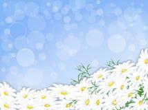 Margaridas brancas ilustração do vetor