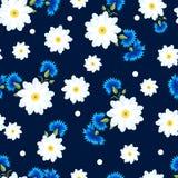 Margaridas brancas e centáureas azuis Imagem de Stock