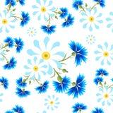 Margaridas brancas grandes e centáureas azuis Fotos de Stock Royalty Free