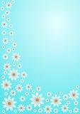 Margaridas brancas no céu azul Ilustração Stock