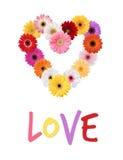 Margaridas coloridos Gerber Daisy Heart Wreath Abstract Love fotografia de stock royalty free