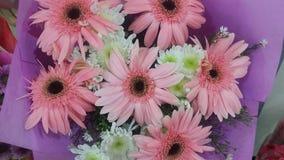 Margaridas cor-de-rosa Fotos de Stock
