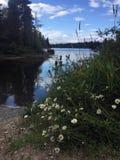 Margaridas de Shasta e cardo canadense na costa do parque provincial do lago spider em um dia de verão ensolarado, BC fotos de stock