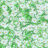 Margaridas do verão Imagem de Stock