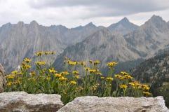 Margaridas e montanhas Foto de Stock Royalty Free