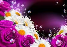 Margaridas e rosas Imagem de Stock Royalty Free