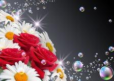 Margaridas e rosas Imagem de Stock