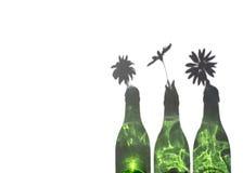 Margaridas na garrafa verde Imagem de Stock