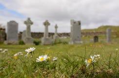 Margaridas no cemitério Foto de Stock Royalty Free