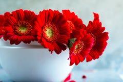 Margaridas vermelhas do Gerbera Fotografia de Stock