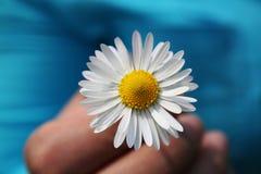 Margarita Imagen de archivo libre de regalías