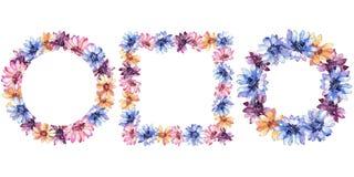 Margarita africana colorida Flor botánica floral Cuadrado del ornamento de la frontera del capítulo Foto de archivo
