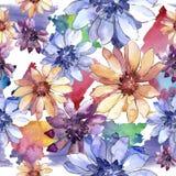 Margarita africana colorida Flor botánica floral Modelo inconsútil del fondo Imagen de archivo