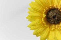 Margarita amarilla brillante hermosa del Gerbera Imagen de archivo libre de regalías