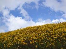 Margarita amarilla con el cielo azul Imagen de archivo libre de regalías