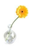 Margarita amarilla en florero Imágenes de archivo libres de regalías