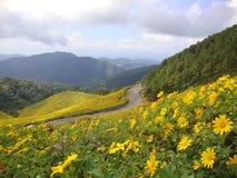 Margarita amarilla en la colina Fotografía de archivo