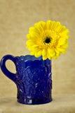 Margarita amarilla en taza del cobalto imagenes de archivo