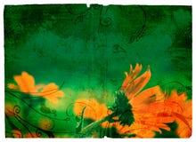 Margarita anaranjada de Grunge Imágenes de archivo libres de regalías