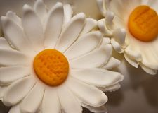 Margarita blanca del mazapán Fotografía de archivo libre de regalías