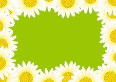 Margarita con gotas Imagen de archivo libre de regalías