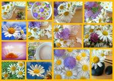 Margarita del collage Foto de archivo libre de regalías