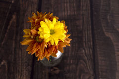 margarita del crisantemo Fotos de archivo libres de regalías