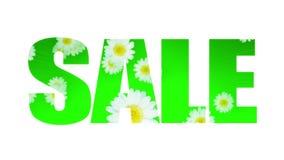 Margarita del verano de la primavera de la venta (lazo) ilustración del vector
