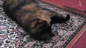 Margarita el gato de casa