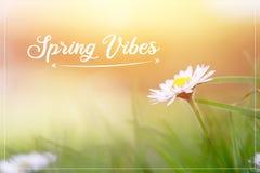 """Margarita en primavera: El cierre encima del sol de la imagen y de la mañana, manda un SMS a ambientes """"Spring imagen de archivo libre de regalías"""