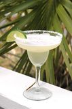 Margarita with Lime Slice. Margarita with salt and lime with palm tree in background Stock Photo