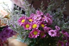 Margarita púrpura Imágenes de archivo libres de regalías