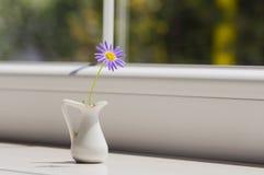 Margarita púrpura en pequeño jarro blanco cerca de la ventana Imagen de archivo libre de regalías