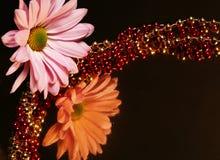 Margarita reflexiva Foto de archivo libre de regalías