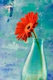 Margarita roja del gerbera Imágenes de archivo libres de regalías
