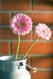 Margarita rosada del gerber Imágenes de archivo libres de regalías