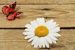 Margarita y mariposa fotografía de archivo
